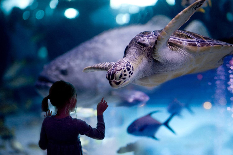 L'aquari, de David Vann
