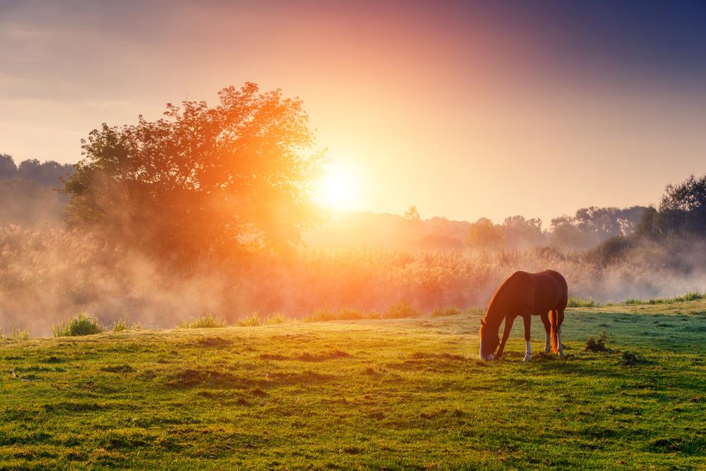 Sortir a robar cavalls, de Per Petterson
